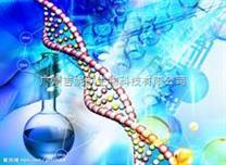 HEC-1-B人子宫内膜腺癌细胞