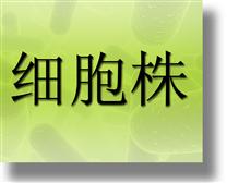稳定转染了neor和LIF基因的STO细胞株