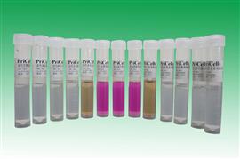 大鼠乳腺腺癌细胞系,MADB106细胞